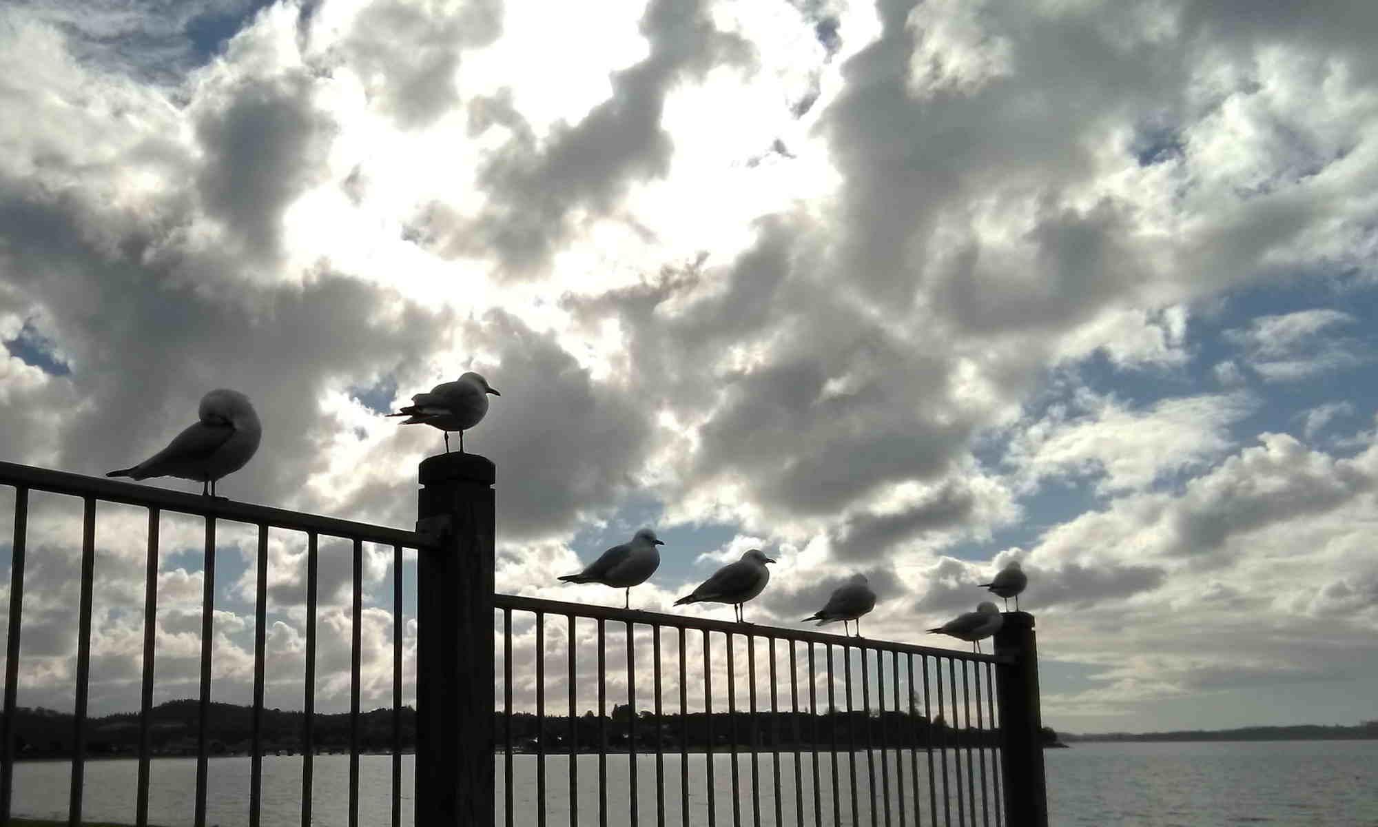 Delphi Academy Vogels